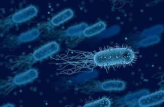 Эффективность использования анаэробных бактерий